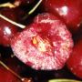 noyau de cerise